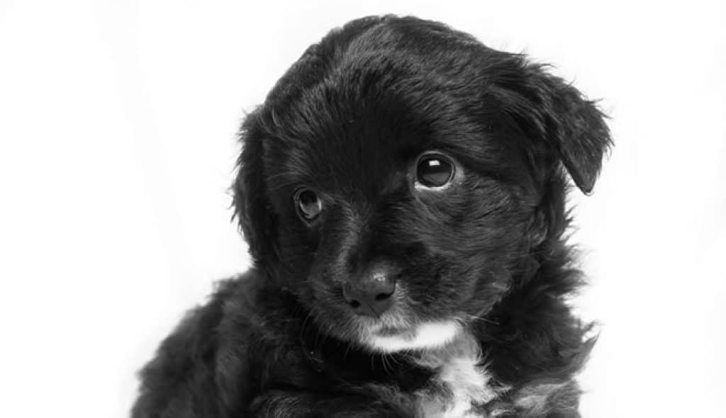 Melhores rações para cachorro filhote