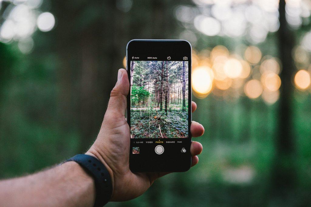 Imagem de uma floresta tirada com o melhor celular para fotos.